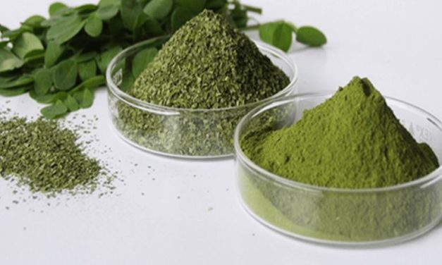 Is Moringa Leaf Powder A Diabetes Cure?