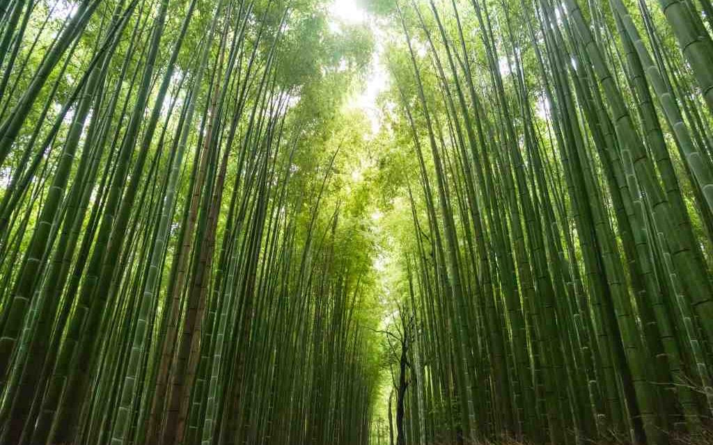 Les Brown Motivational Video Chinese Bamboo Tree The Pd Cafe